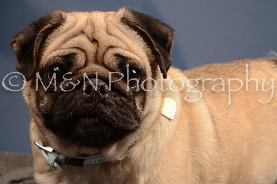 M&N Photography -DSC_4197