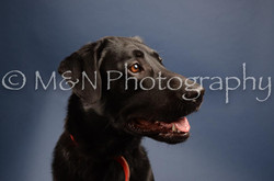 M&N Photography -DSC_4174