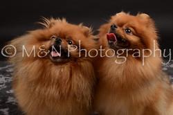 M&N Photography -DSC_0170