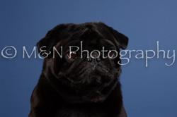 M&N Photography -DSC_5073