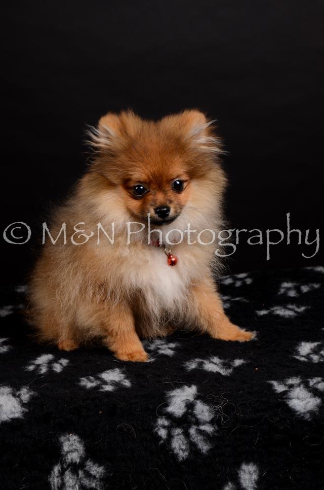 M&N Photography -DSC_5822