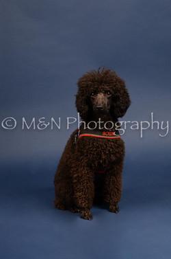 M&N Photography -DSC_3970
