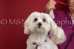 M&N Photography -DSC_3636