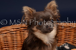 M&N Photography -DSC_0351