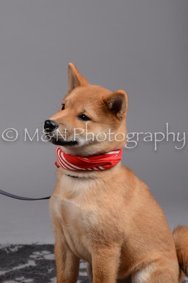 M&N Photography -DSC_2577