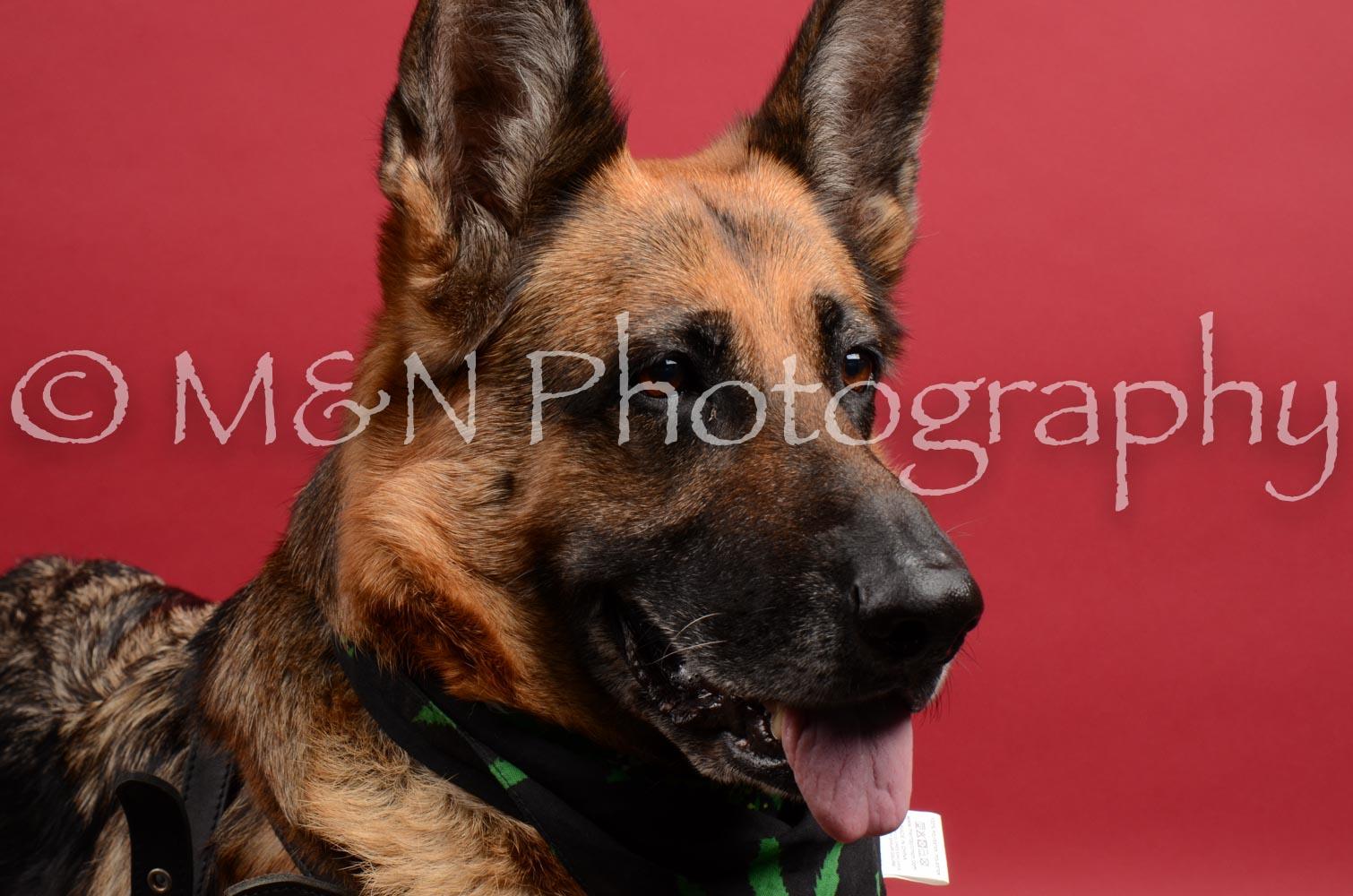 M&N Photography -DSC_8593