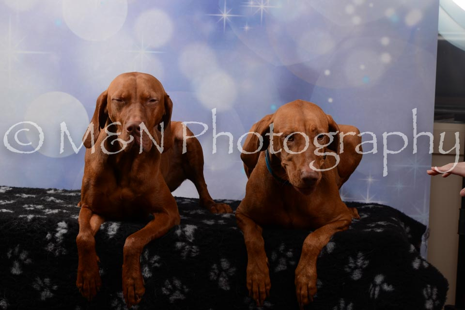 M&N Photography -DSC_7040