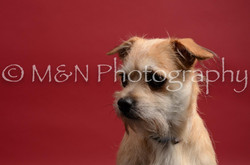 M&N Photography -DSC_8568