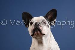 M&N Photography -DSC_5005-2