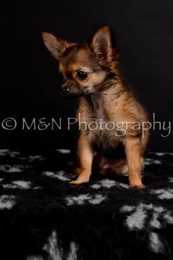 M&N Photography -DSC_5741