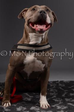 M&N Photography -DSC_2163
