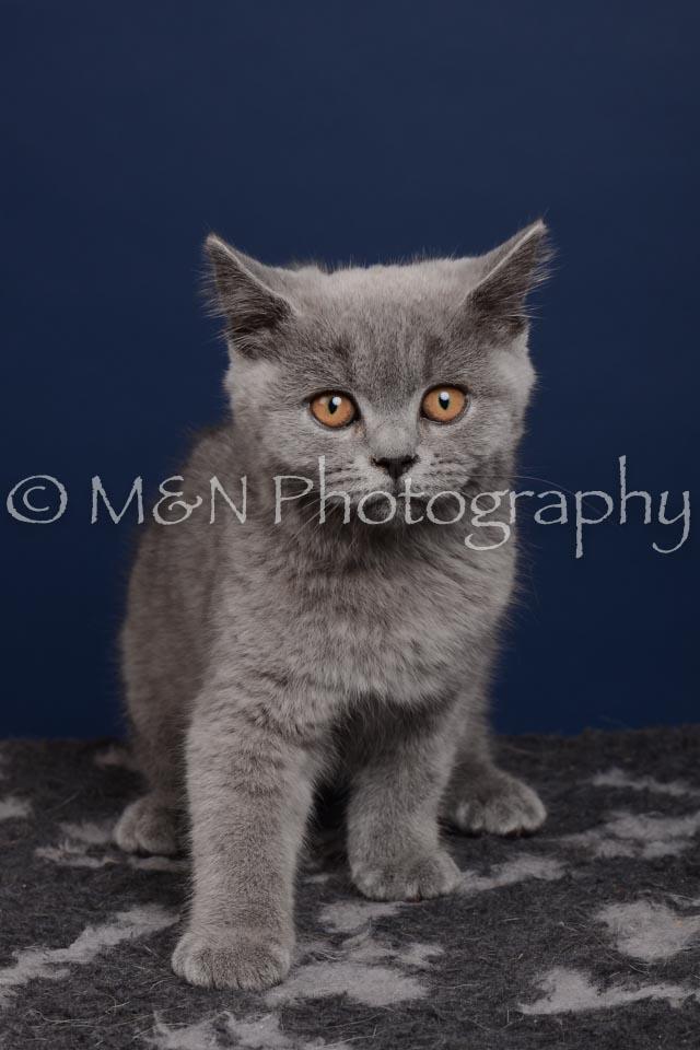 M&N Photography -DSC_4285