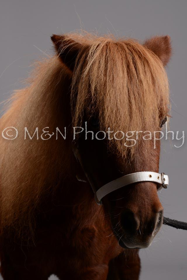 M&N Photography -DSC_2462