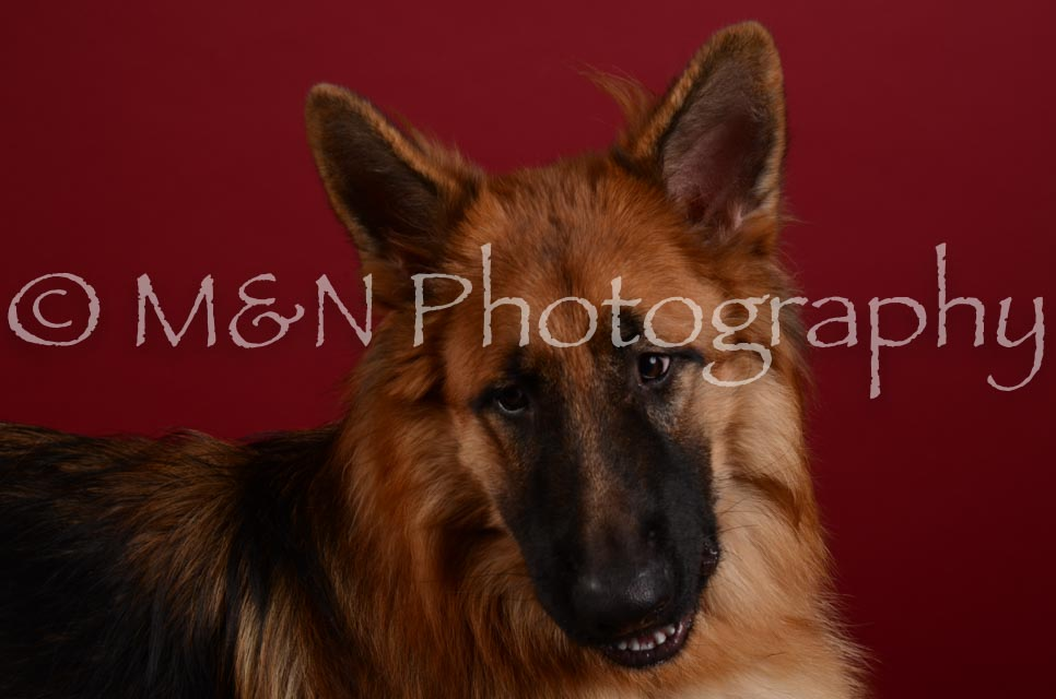 M&N Photography -DSC_3428