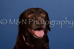 M&N Photography -DSC_5137