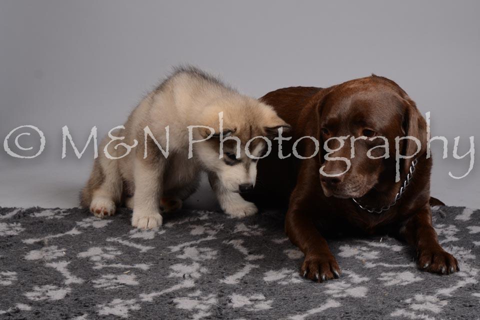 M&N Photography -DSC_2620