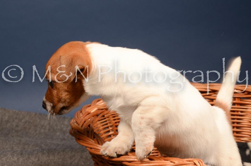 M&N Photography -DSC_4082