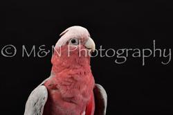 M&N Photography -DSC_2737