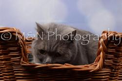 M&N Photography -DSC_6972