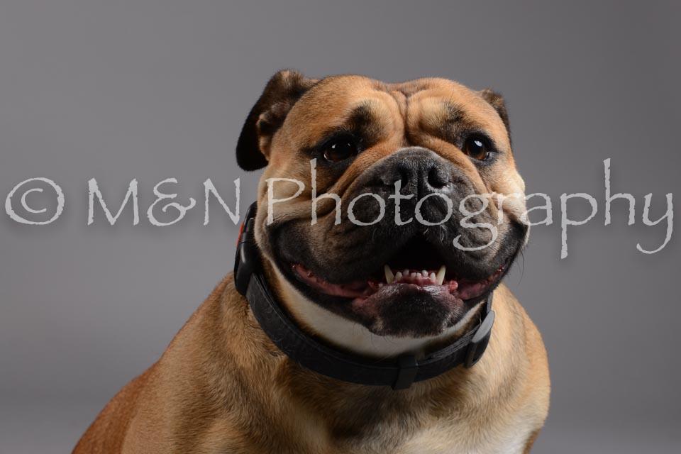 M&N Photography -DSC_1743