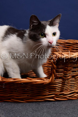 M&N Photography -IMG_4481