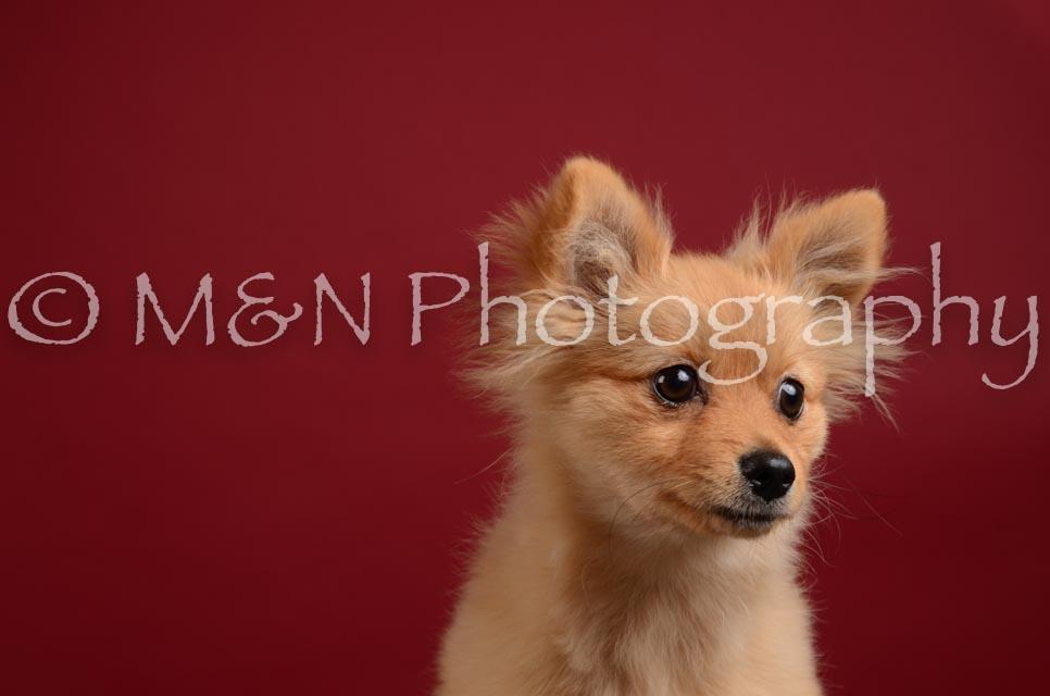 M&N Photography -DSC_3250