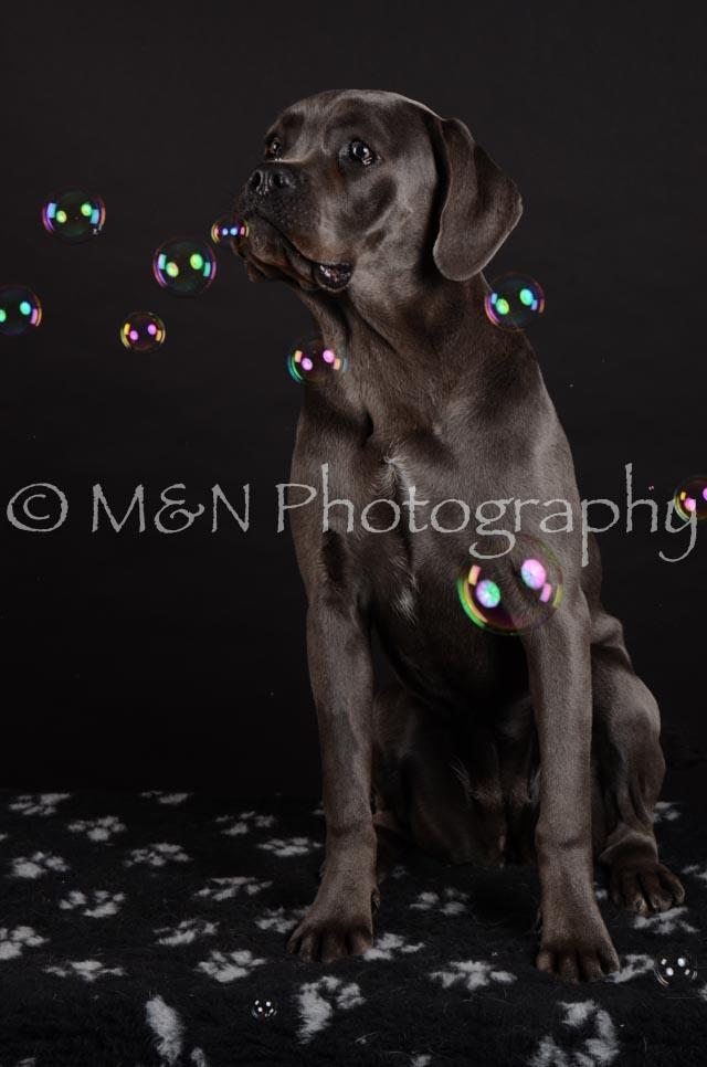 M&N Photography -DSC_5589