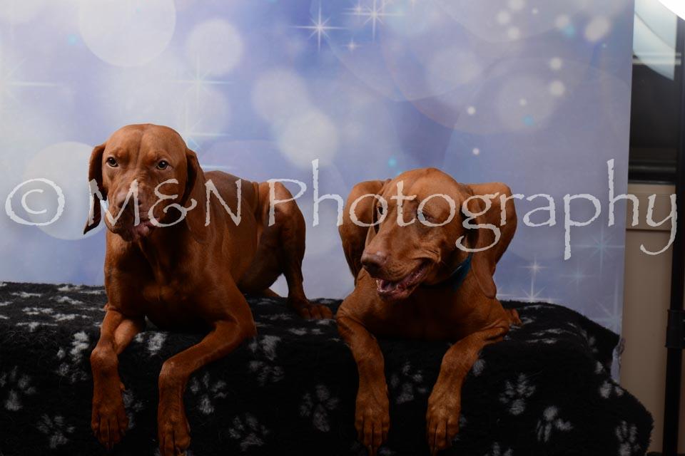 M&N Photography -DSC_7042