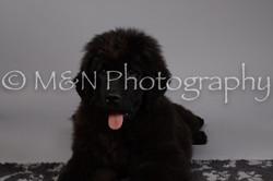 M&N Photography -DSC_1538