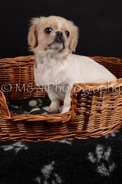 M&N Photography -DSC_6013