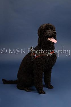 M&N Photography -DSC_3962