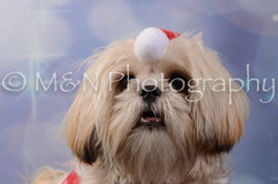 M&N Photography -DSC_7153