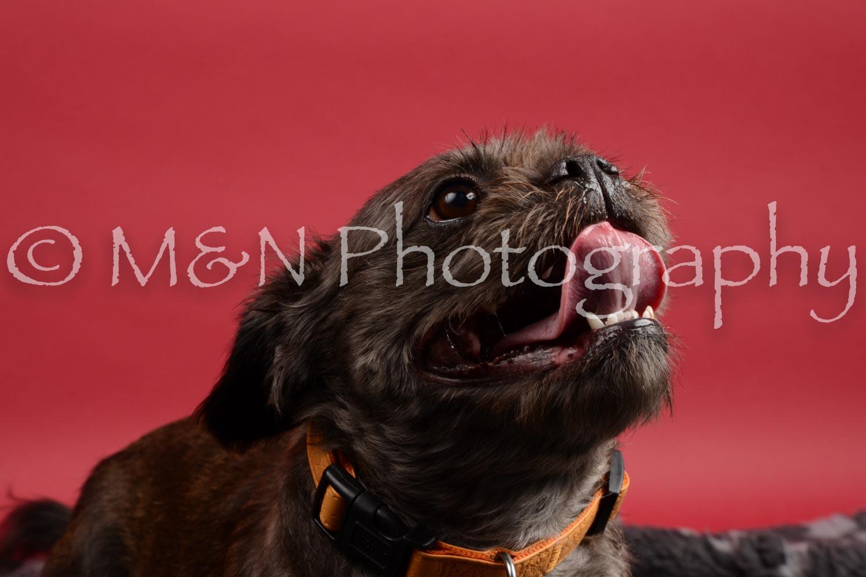 M&N Photography -DSC_8488
