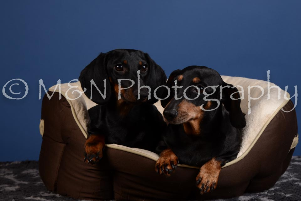 M&N Photography -DSC_5369