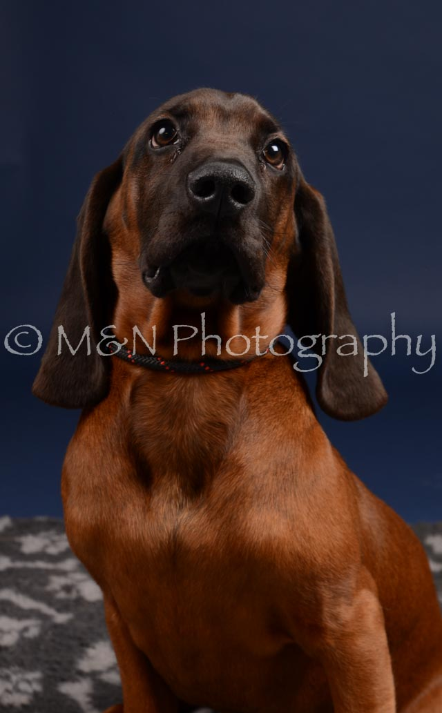 M&N Photography -DSC_0251