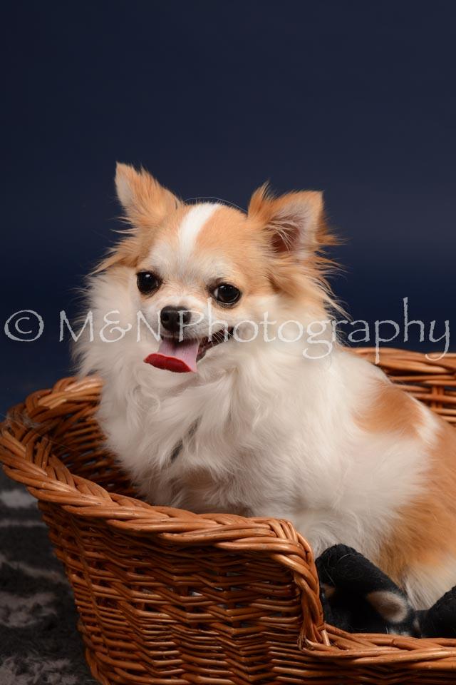 M&N Photography -DSC_0597