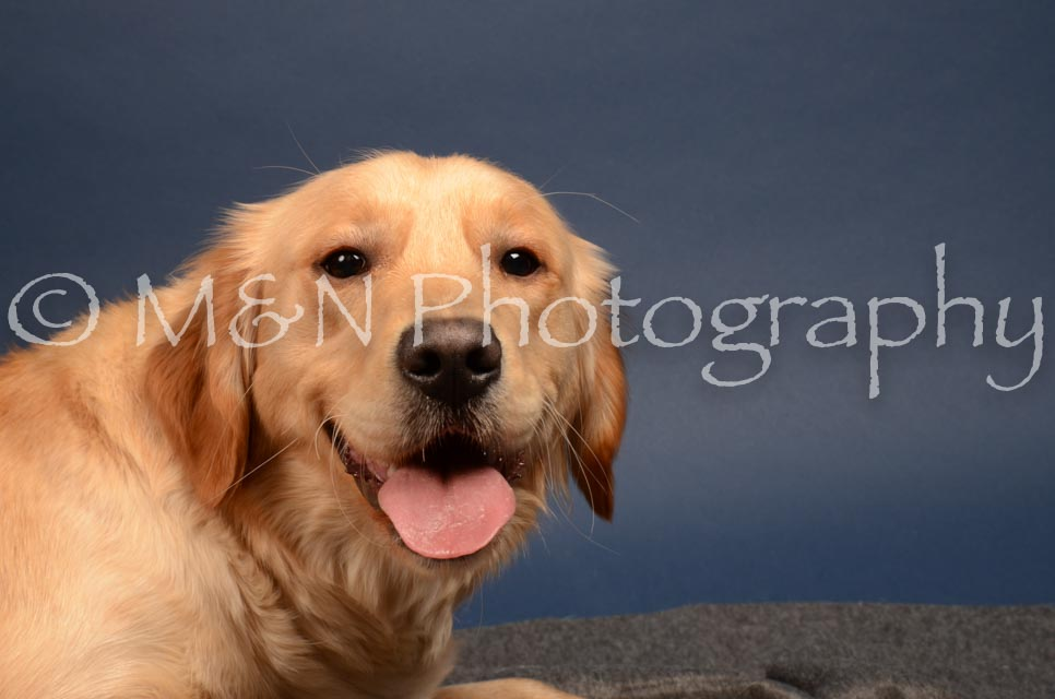 M&N Photography -DSC_4145