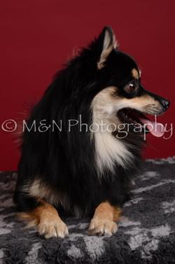 M&N Photography -DSC_3211