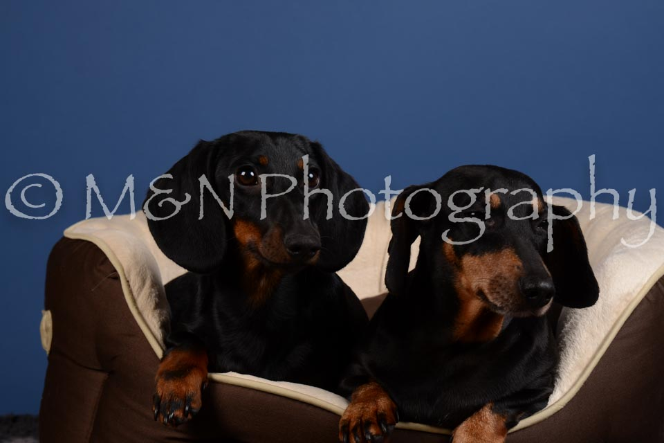 M&N Photography -DSC_5368