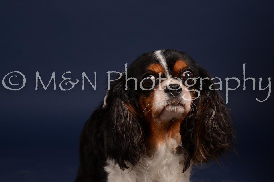 M&N Photography -DSC_0630