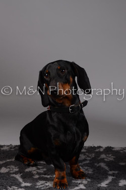 M&N Photography -DSC_1521