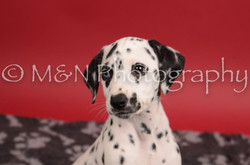M&N Photography -DSC_6801-2
