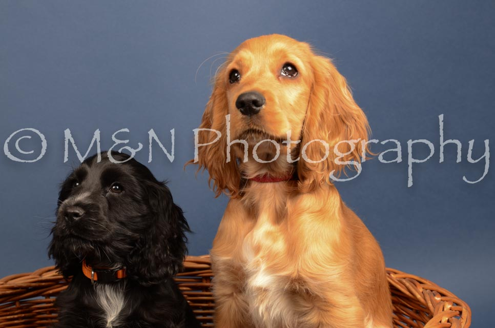 M&N Photography -DSC_4294