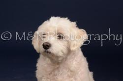 M&N Photography -DSC_0386