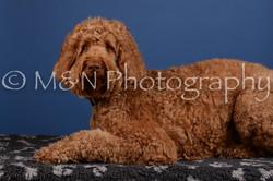M&N Photography -DSC_4962