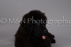 M&N Photography -DSC_1537