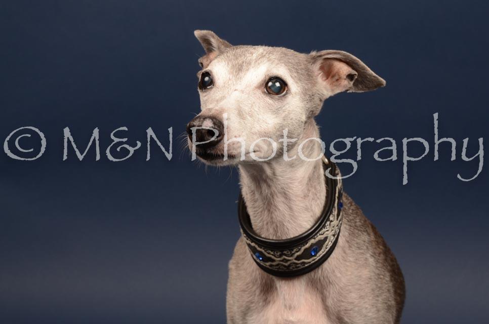 M&N Photography -DSC_4605