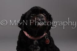 M&N Photography -DSC_2329