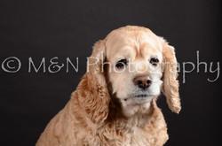 M&N Photography -DSC_5402
