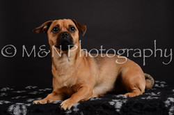 M&N Photography -DSC_5462